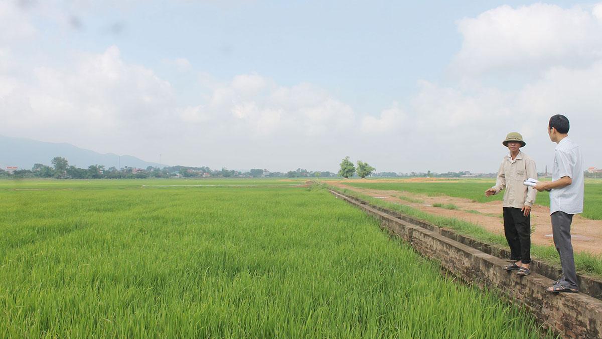 Hiệu quả từ cánh đồng mẫu