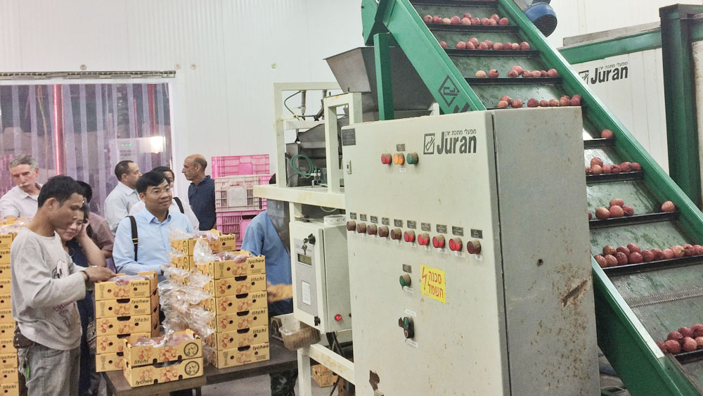 Israeli technology, lychee fruit, Bac Giang province, Advanced Science, Technology Application, national project, Juran company, production model, inspection system, GlobalGAP certificate, lychee cultivation