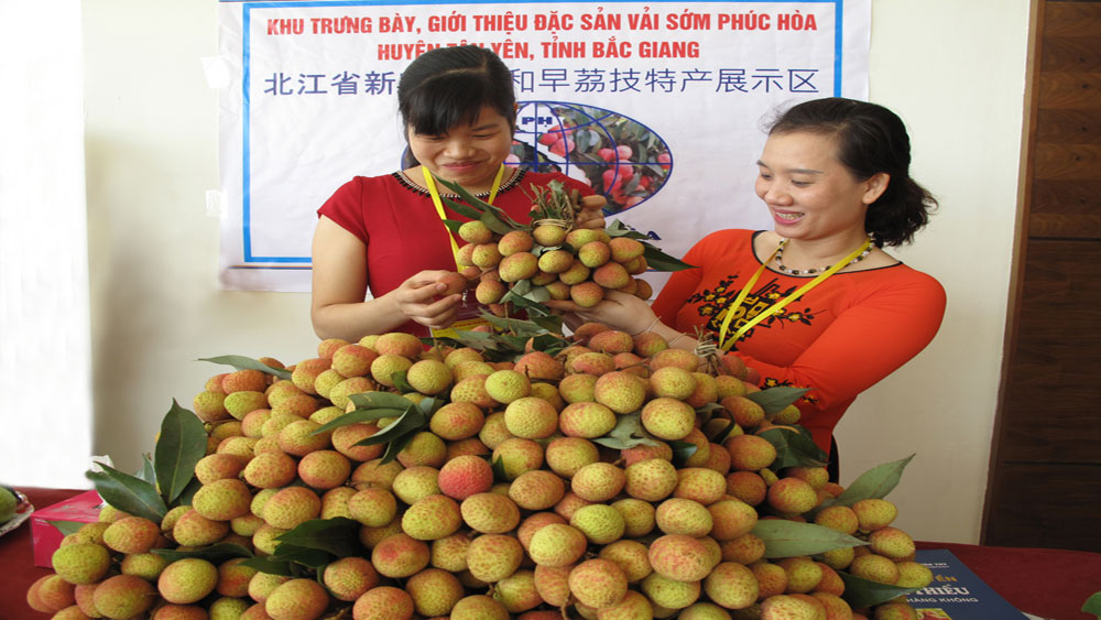 Seeking markets for lychee fruit