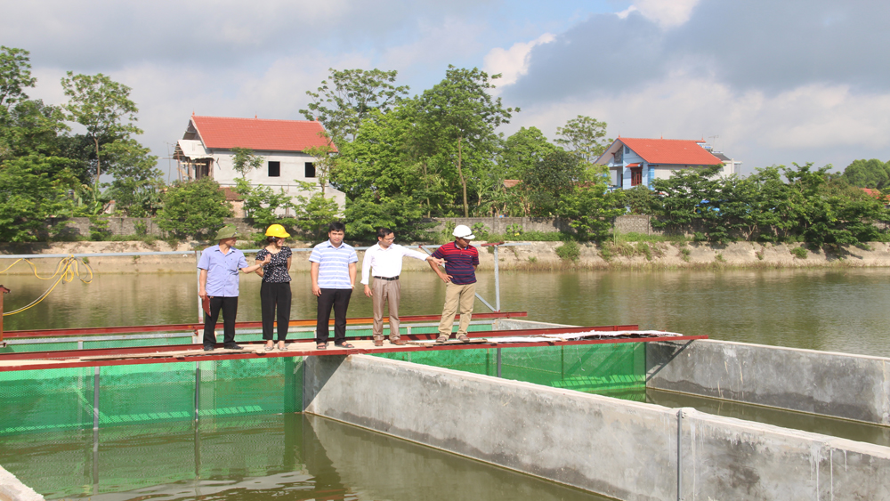 Hiep Hoa applies hi-tech in intensive fish farming