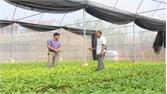 Hiệp Hòa thành lập tổ nhà màng sản xuất nông nghiệp công nghệ cao