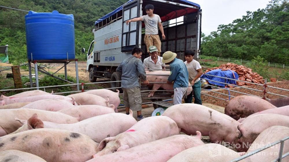 Giá lợn hơi tăng mạnh khiến chỉ số giá tiêu dùng tháng 5 tăng