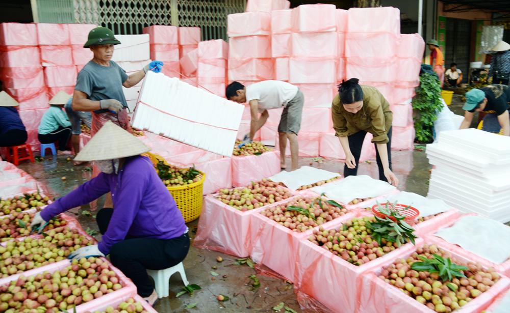 Lục Ngạn, sẵn sàng,  mùa quả ngọt