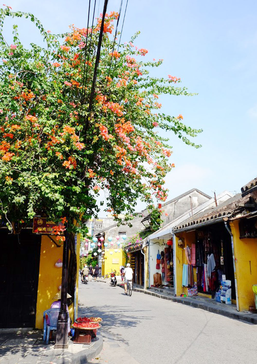 Hoi An, breathtaking floral explosion, summer destination, ancient town, beautiful blooming flowers,
