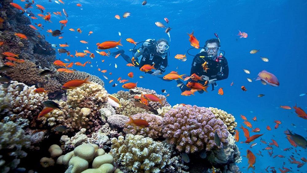 Từ 1-6, áp dụng, quy định, môn lặn biển thể thao giải trí