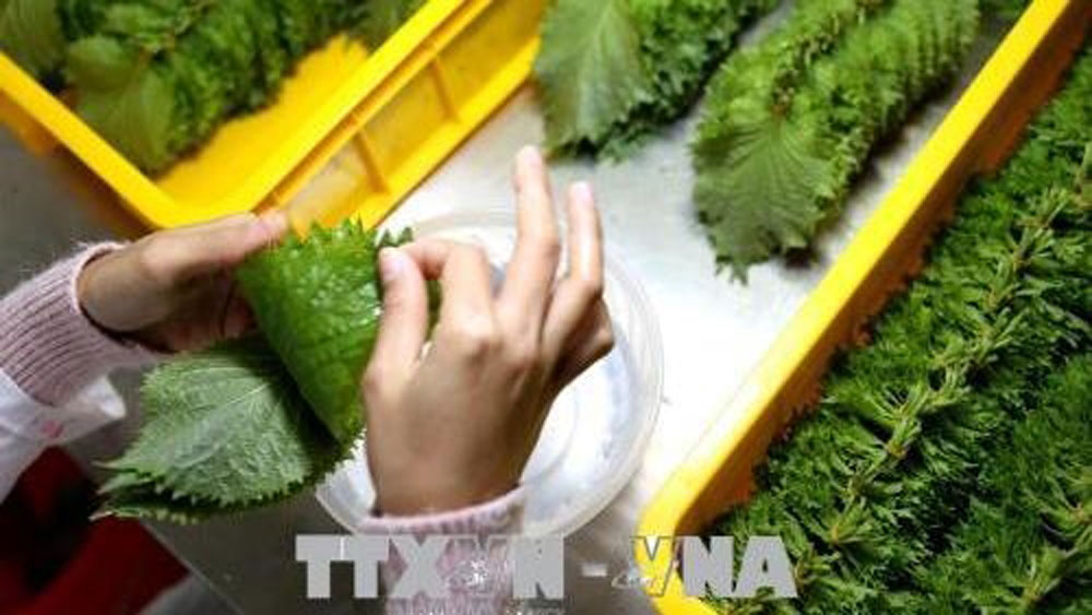 Vietnam's fruit and vegetable exports hit US$1.62 billion in five months