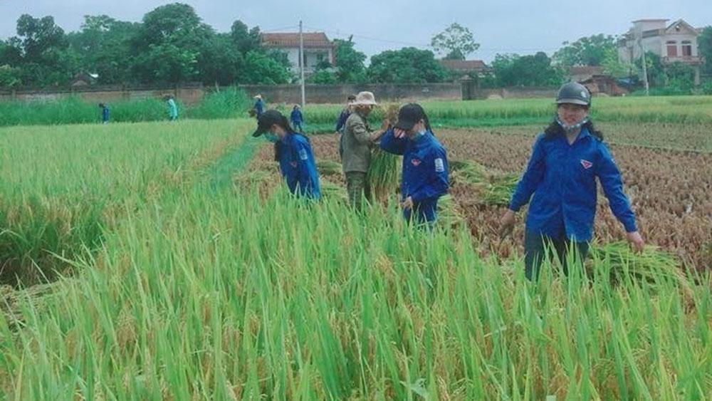 Đoàn viên Trường THPT Tân Yên 2 tham gia gặt lúa giúp nông dân.