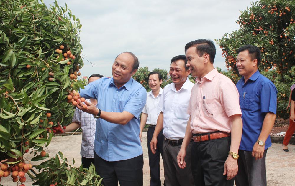 Đồng chí Nguyễn Văn Linh, Chủ tịch UBND tỉnh thăm mô hình sản xuất vải thiều theo quy trình an toàn tại xã Quý Sơn (Lục Ngạn).