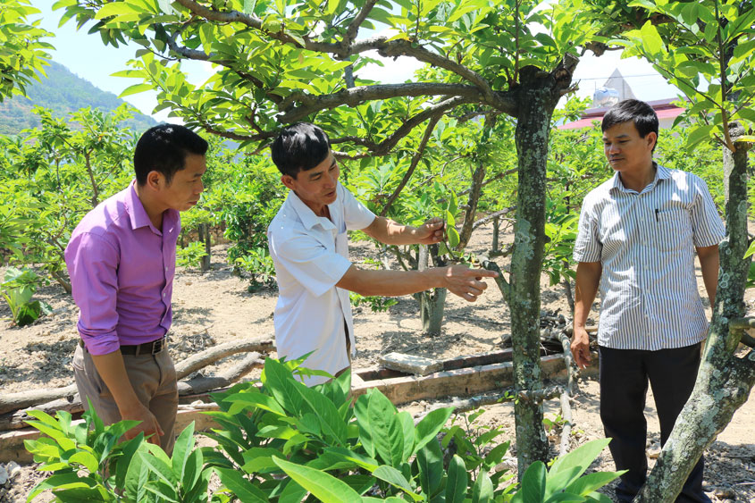 Ông Trần Văn Hòa, thôn Giếng Giang, xã Huyền Sơn (đứng giữa) kiểm tra vườn na của gia đình.