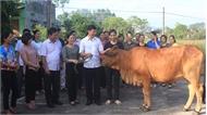 Trao 27 con bò giống cho hội viên phụ nữ nghèo