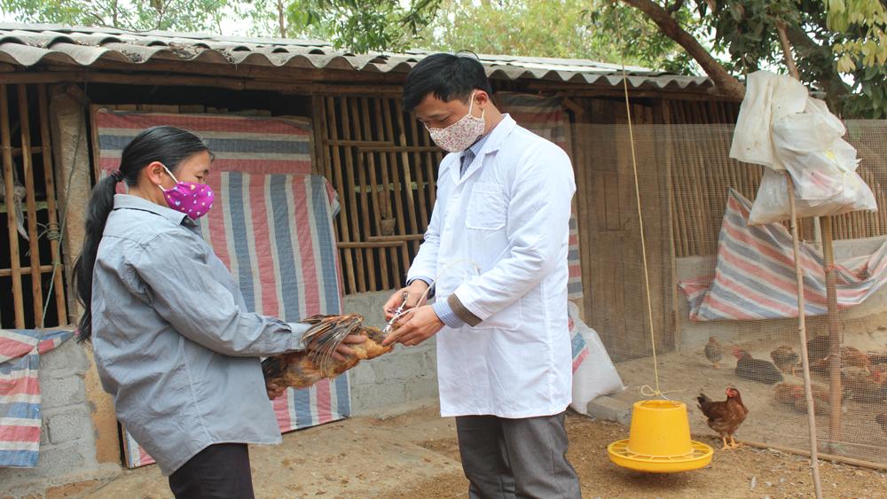Tỷ lệ tiêm vắc –xin phòng cúm gia cầm đạt cao nhất tỉnh