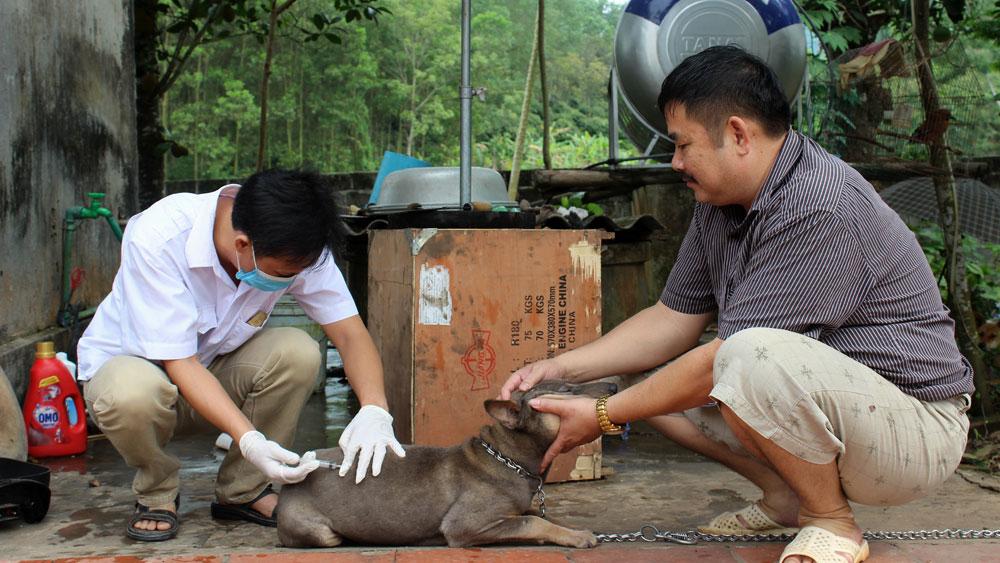 Tập trung tiêm phòng bệnh dại cho đàn chó mèo