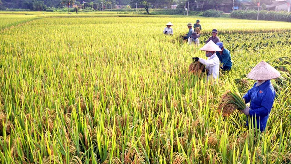 Lục Nam, năng suất lúa, chiêm xuân, đạt gần 63 tạ/ha, Bắc Giang