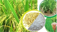 Giá trị xuất khẩu gạo 5 tháng tăng 40%