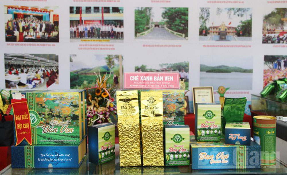 Xuan Luong commune, Bac Giang province, tea fields, outstanding achievements, tourism development, great source of income, forest and agricultural plants, economic development, key products