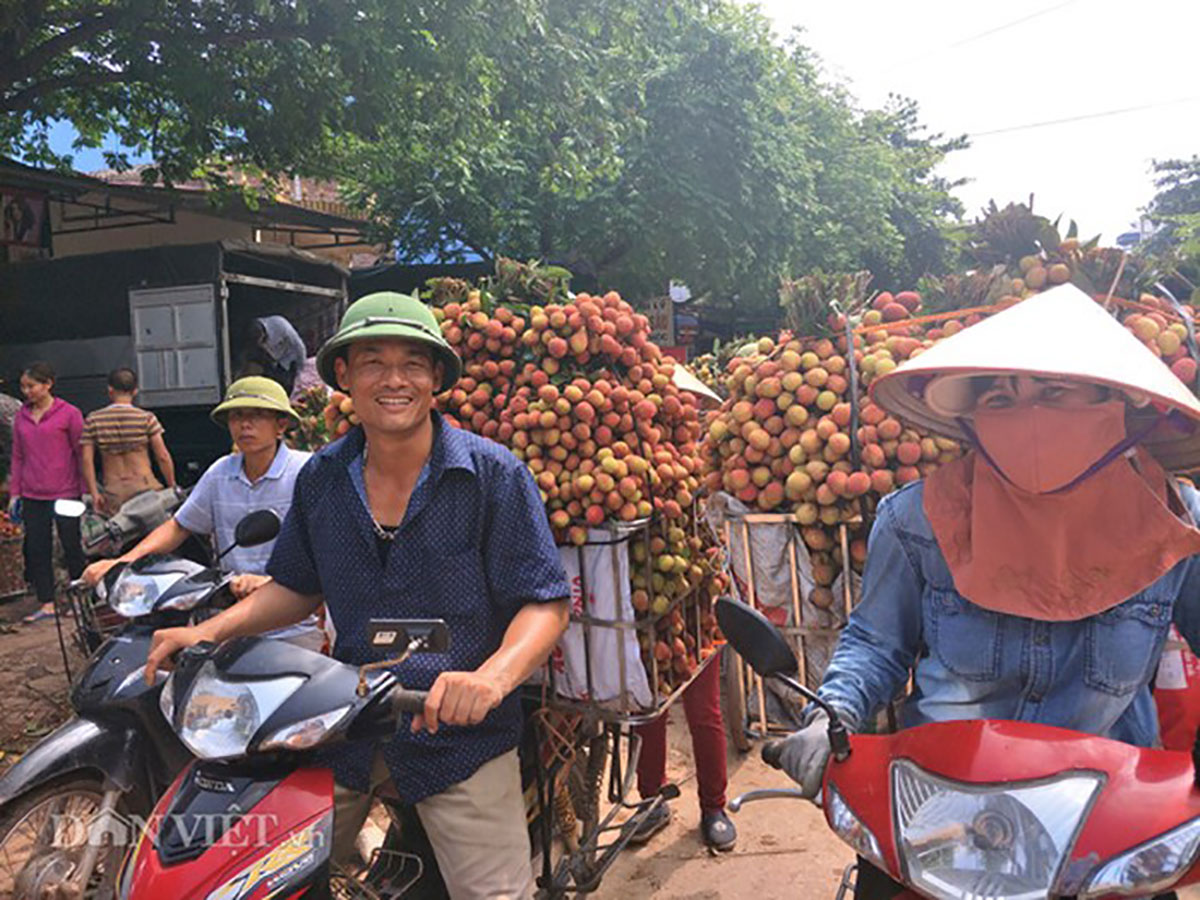 Vải thiều Lục Ngạn, Bắc Giang, Hà Nội