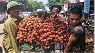 Từ ngày 13-6, vải thiều Lục Ngạn sẽ đổ bộ xuống Hà Nội
