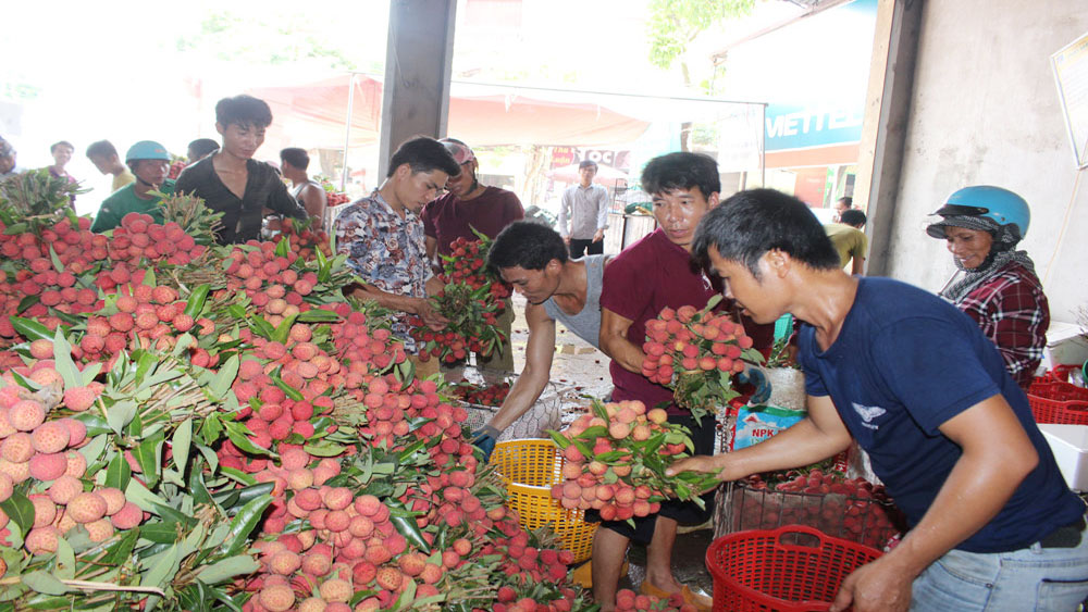 Chinese traders, Bac Giang province, lychee consumption, lychee price, Economic Forum, production and consumption, key agriculture produces, weighing points