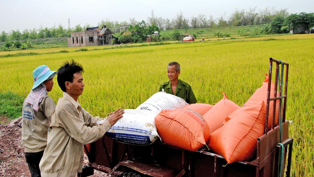 lúa xuân, tỉnh Bắc Giang, Sở Nông nghiệp và PTNT, năng suất