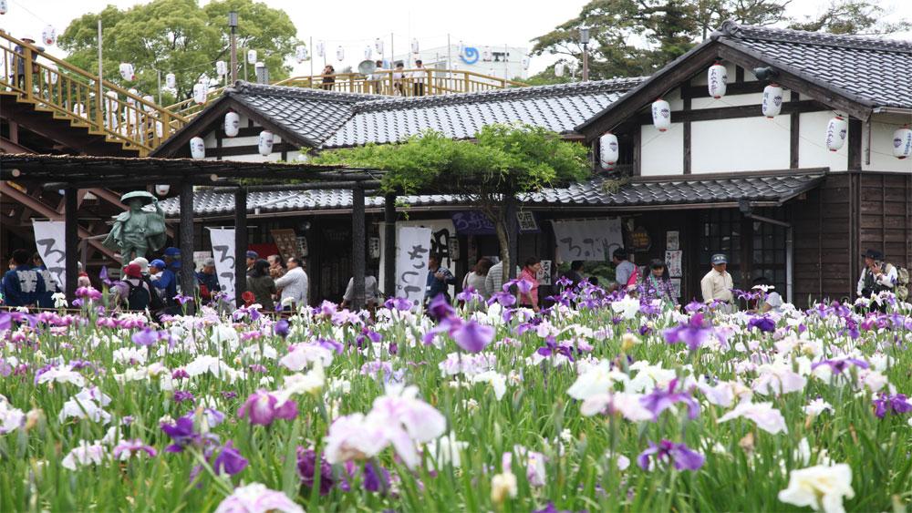 Lễ hội, hoa và nước, báo hiệu, mùa hè, Nhật Bản