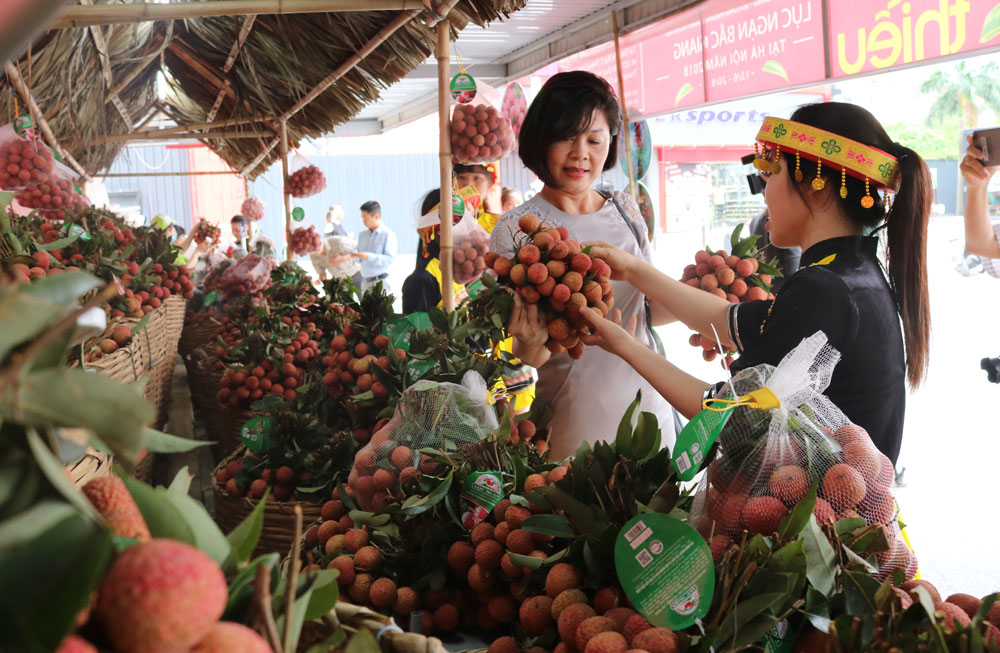 Bac Giang province, sweet fruits, Hanoi consumers, Luc Ngan Litchi Week, Big C, Thang Long Supermarket, fresh fruits, specialty farm produce, original prices, Continue promotion
