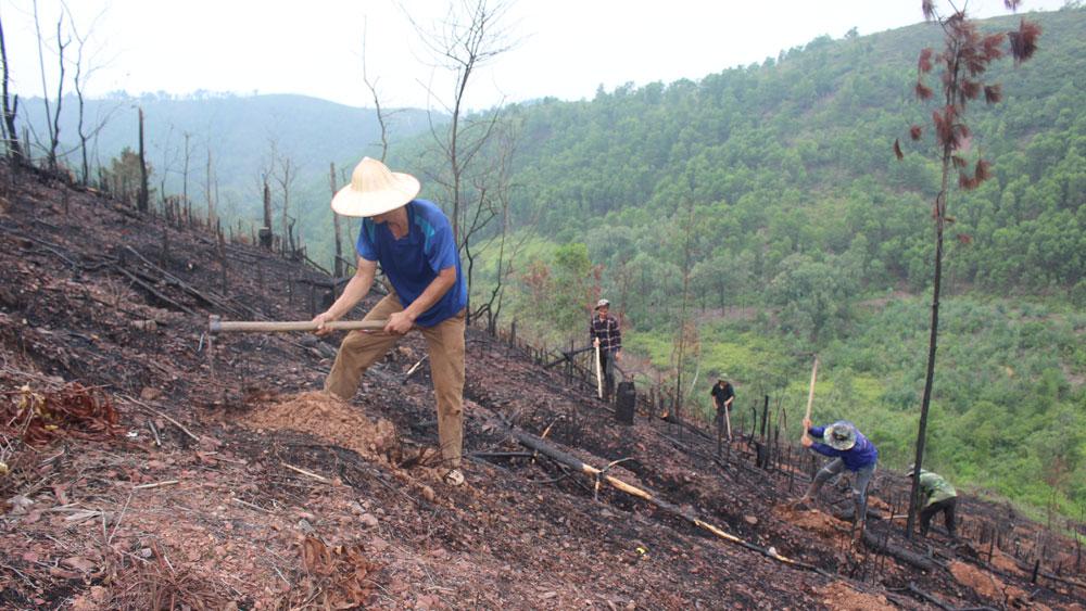 Tiến độ trồng rừng chậm so với kế hoạch