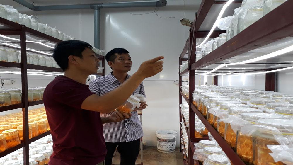 Doanh thu hơn 11 tỷ đồng từ sản xuất nấm