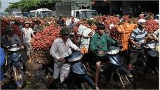 Bắc Giang: Chợ vải thiều họp đến 10 giờ đêm, người dân thu hơn 5.500 tỷ đồng
