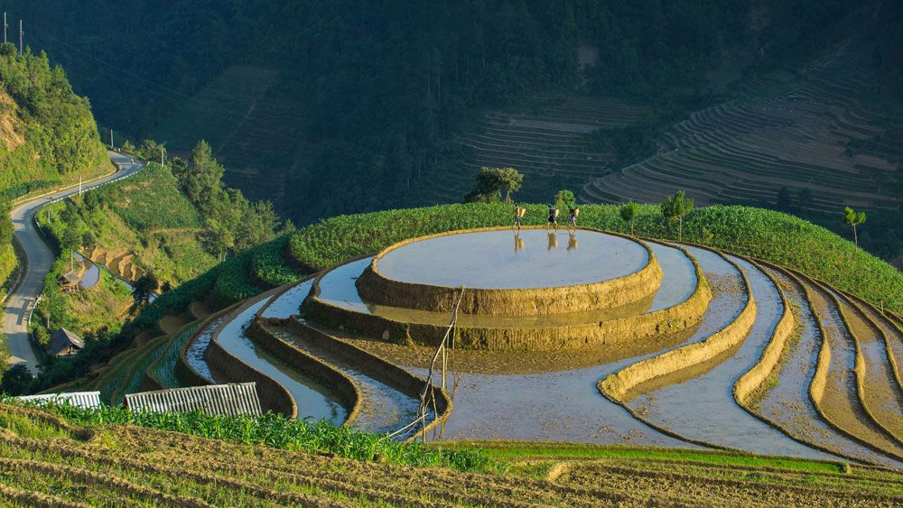 When rice fields sparkle in Vietnam's northern highlands
