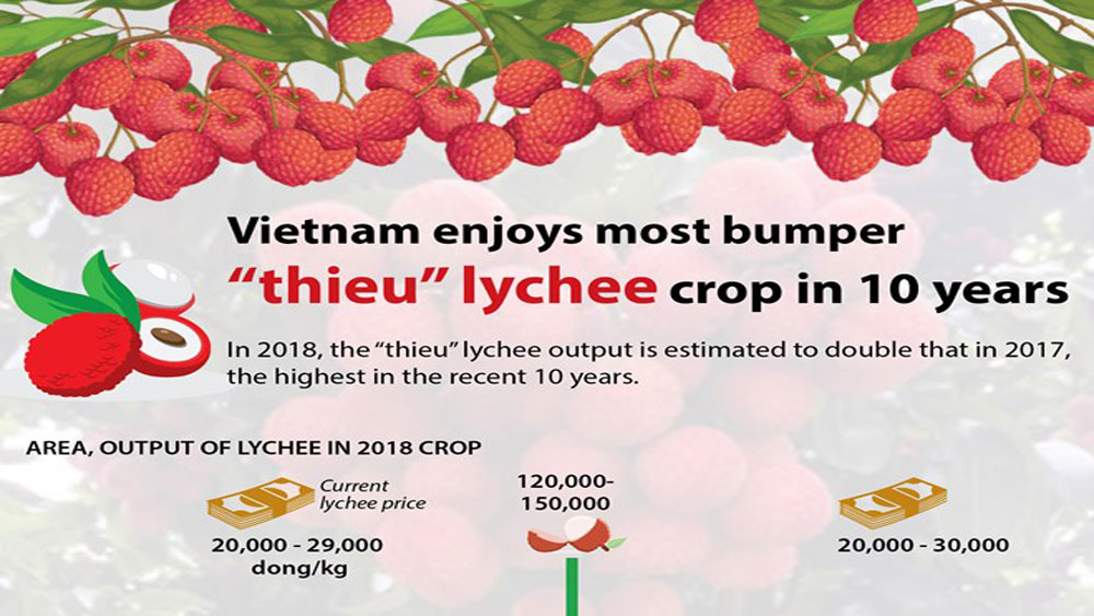 "Vietnam enjoys most bumper ""thieu"" lychee crop in 10 years"