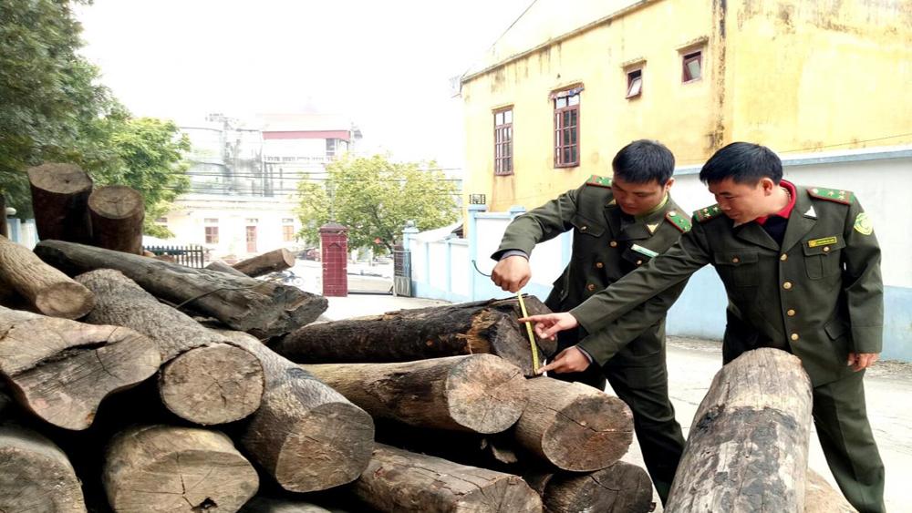 Tăng cường bảo vệ rừng, Sơn Động