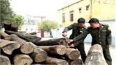 Sơn Động: Tăng cường bảo vệ rừng