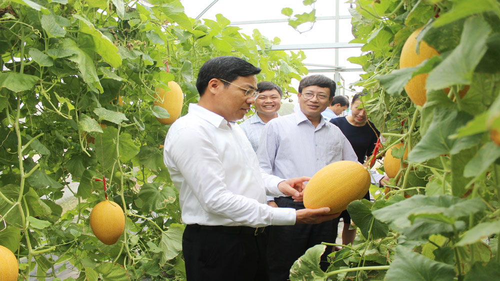 Bac Giang Agriculture and Forestry University pilots hi-tech farming model