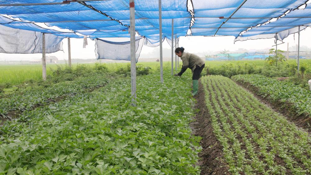 11 nghìn lượt nông dân được tập huấn kiến thức sản xuất nông nghiệp