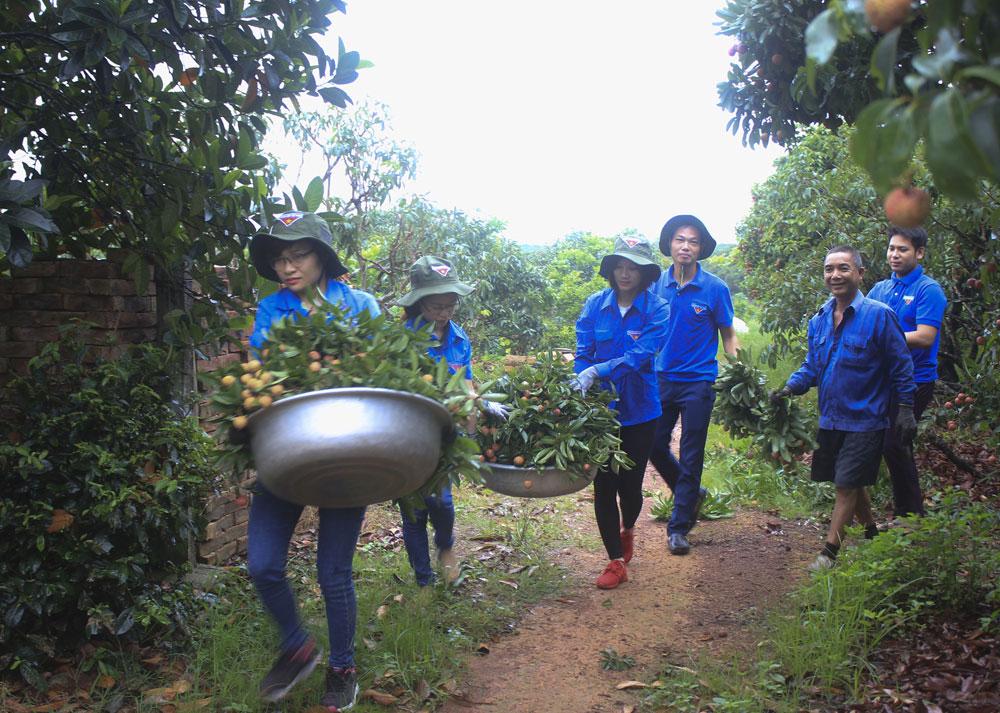 xung kích, đoàn viên thanh niên, Lục Ngạn, Bắc Giang, thu hoạch vải thiều, tình nguyện