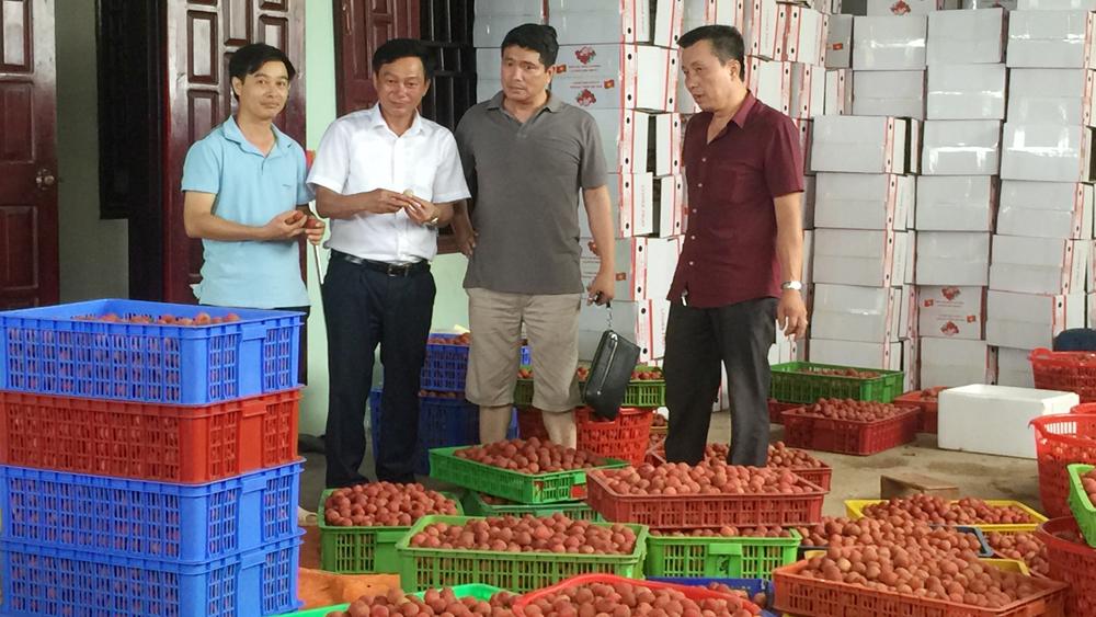 HTX nông nghiệp Hồng Xuân thu mua vải thiều giá từ 22 - 23 nghìn đồng/kg