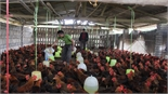 Hơn 500 mô hình kinh tế trang trại cho thu nhập cao