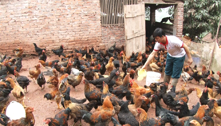 Sản lượng thịt hơi xuất chuồng các loại tăng gần 2 nghìn tấn