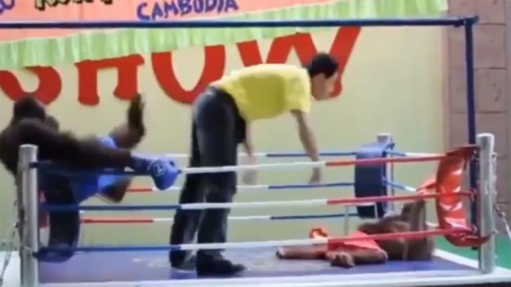 """Trọng tài """"no đòn"""" vì bị hai võ sĩ tấn công"""