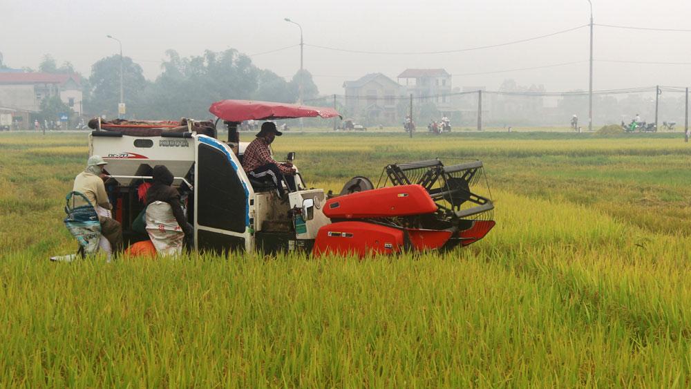 Việt yên, năng suất lúa, tăng