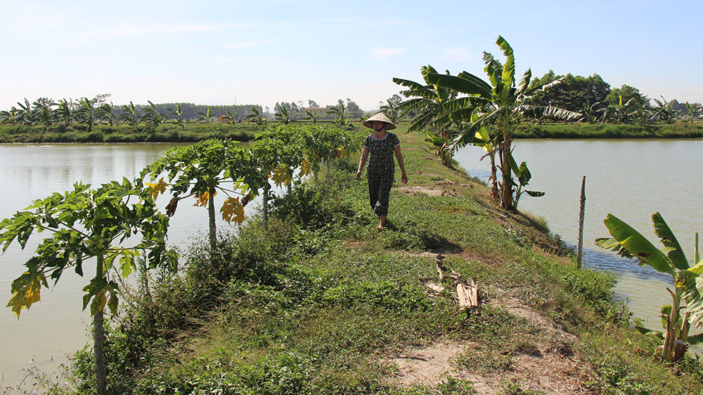 Yên Dũng: Vùng nuôi thủy sản tập trung chưa phát huy hiệu quả