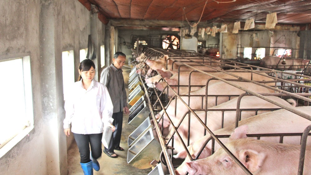 High profit farming models in Bac Giang province