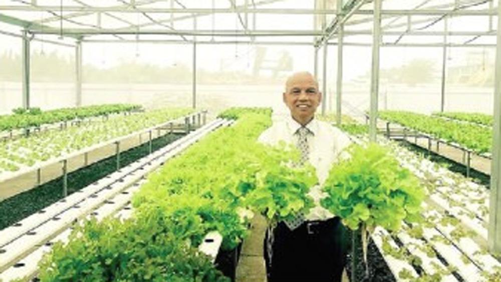 Việt kiều, trồng rau chất lượng, toàn cầu, đắt không bán, muốn bán rẻ, Hội đồng Quản trị, Công ty Cổ phần Dịch vụ