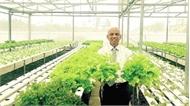 Việt kiều về trồng rau chất lượng toàn cầu, muốn bán rẻ