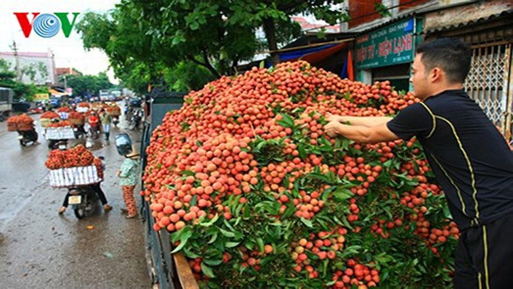 Vải thiều, Bắc Giang, giá trị 153 triệu USD