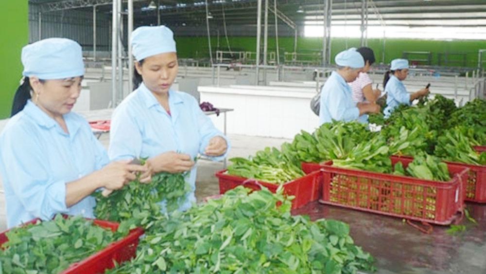 Hanoi promotes advantages of collective economic model