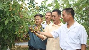 Làm giàu từ mô hình trồng cây ăn quả