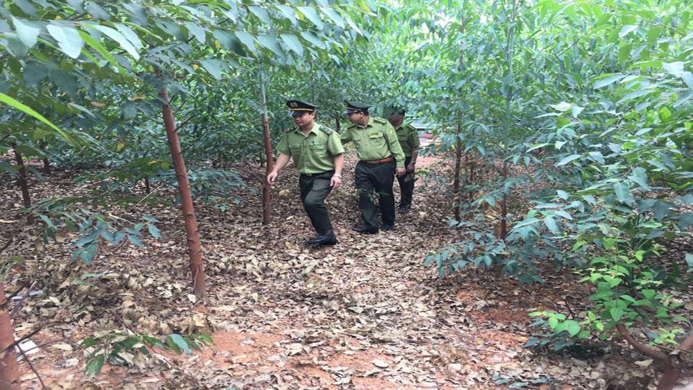 Lạng Giang; trồng cây phân tán.