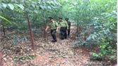 Phấn đấu trồng thêm 60 nghìn cây xanh