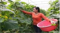 Xây dựng thương hiệu  nông sản Việt Yên
